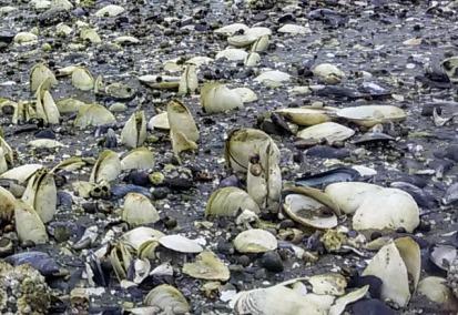 Shells on the sandbar