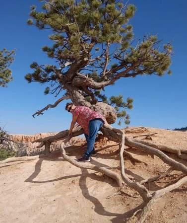 My big butt tree!